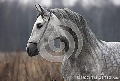 Gray horse autumn