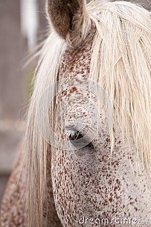 Gray horse eye