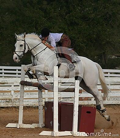 Gray horse jump