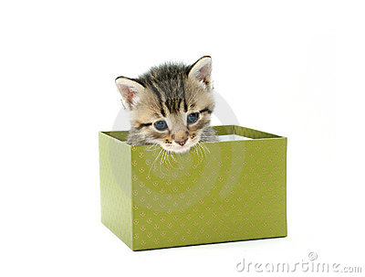 Gray kitten in green box