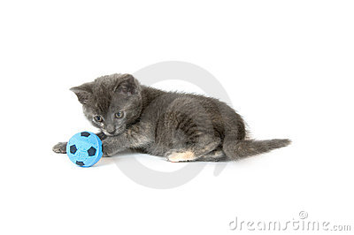 Gray kitten playing with soccer ball