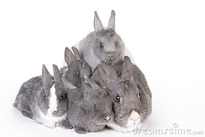 Gray mother rabbit with four bunnies
