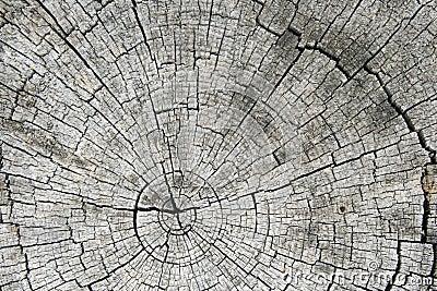 Gray sawed log end