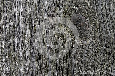 Gray texture of old wood
