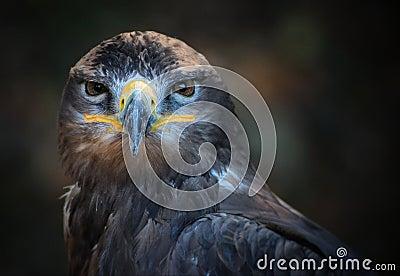 Gray Yellow And White Eagle Free Public Domain Cc0 Image