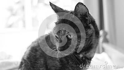 Grayscale Photography Of Cat Free Public Domain Cc0 Image
