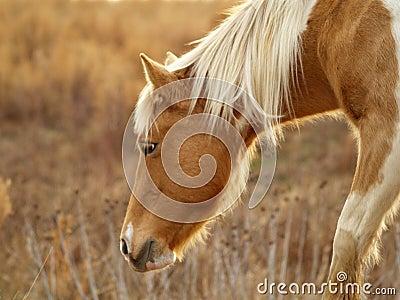 Grazing Horse Free Public Domain Cc0 Image