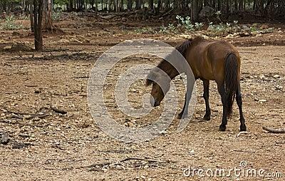 Grazing horse back