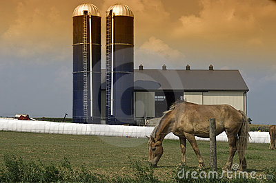 Grazing horse barn silos