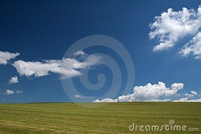 A grazing land on a summer day