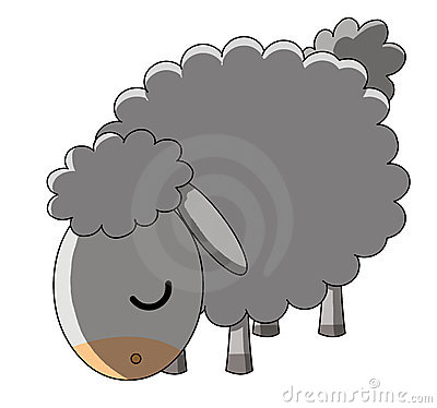 Grazing sheep on white background