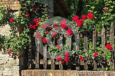 Staket staket rosor : Grazzano Visconti Staket Och Rosor Foton – 2 Grazzano Visconti ...