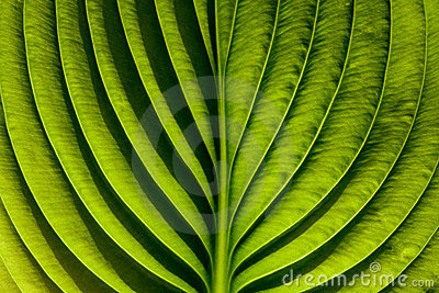 Grean leaf
