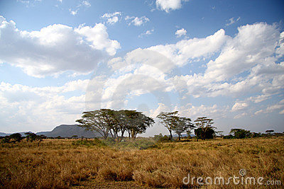Great Africa savanna landscape