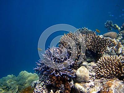 Great Barrier Reef Australia.