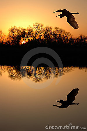 Free Great Blue Heron Royalty Free Stock Photo - 2510395