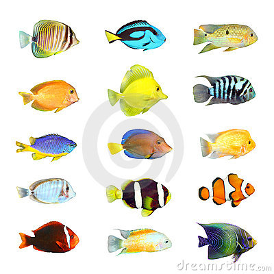 Free Great Collection Of A Tropical Fish. Royalty Free Stock Photo - 18512335
