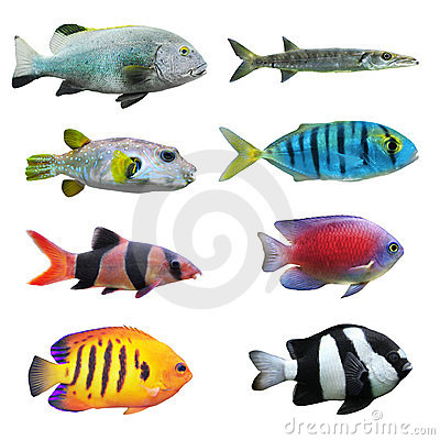 Free Great Collection Of A Tropical Fish. Stock Images - 19946114