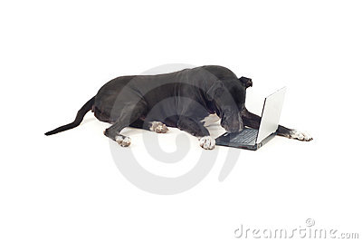 Great dane dog using laptop