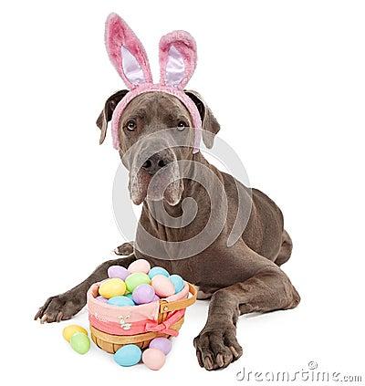 Great Dane Easter Bunny