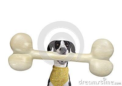Great Dane with Giant Bone