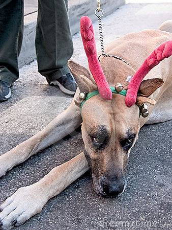 Great dane reindeer