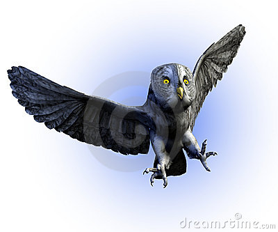 Great Gray Owl 2 - with clipping path
