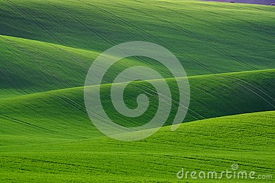 Great Natural Green Background. Spring Rolling Green Hills With Fields Of Wheat. Amazing Fairy Minimalistic Spring Landscape With Stock Photo