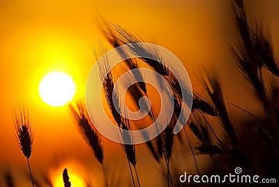 Great summer sunset