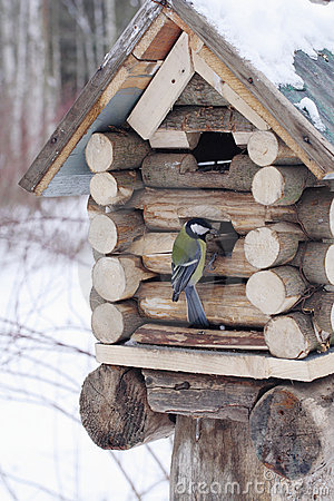 Free Great Tit Sits On Feeder As Small House Royalty Free Stock Photography - 4365737