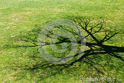 Great tree shadow