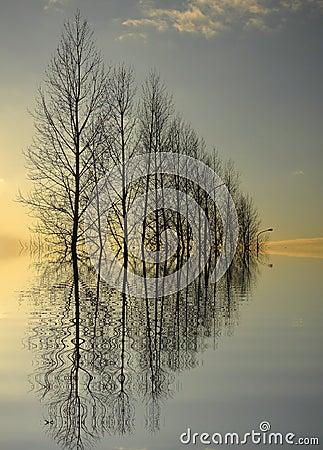 Free Great Trees Reflection Stock Photo - 4367680