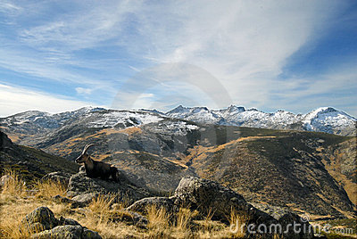 Gredos landscape with wildlife