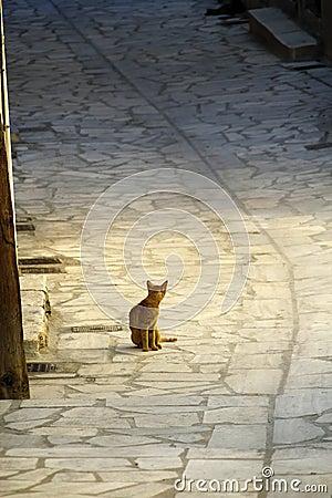 Greece, cute stray kitten
