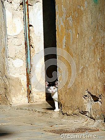 Greece, cute stray kitten Stock Photo