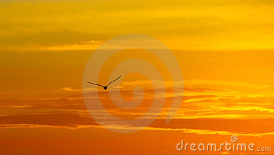 Greece, seagull sunset