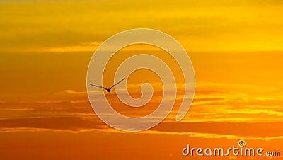 Greece, seagull sunset