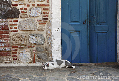 A greek cat