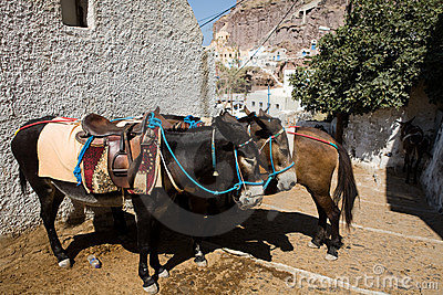 Greek Donkeys