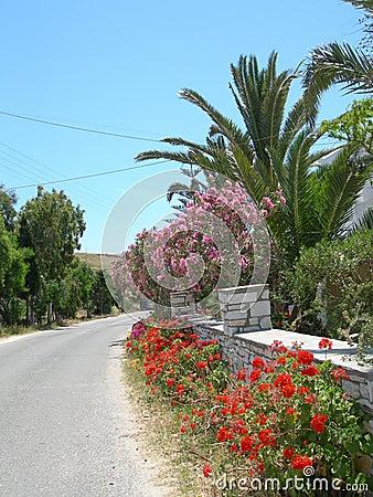 Greek island street scene with flowers