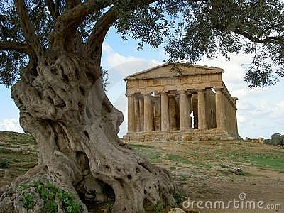Greek temple & olive tree