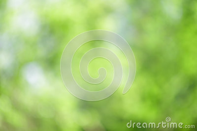Green Abstract Forest Nature Background