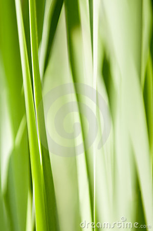 Green abstract grass