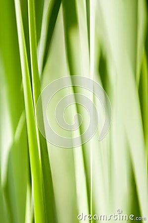 Green abstract grass