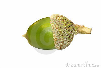 Green Acorn on isolated on white background