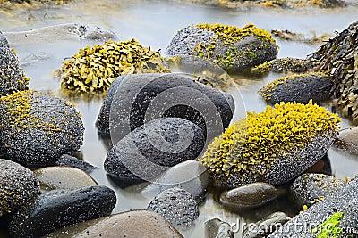 Green algae or seaweed
