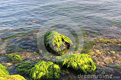 Green algaes over rocks