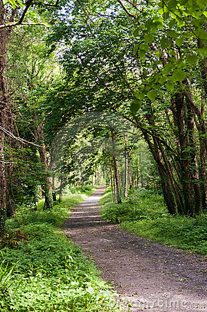 Green Alley in the park