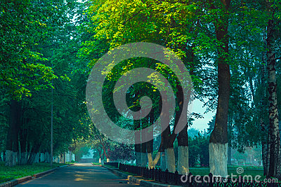 Green Alley In Park Royalty Free Stock Photography - Image: 25455197
