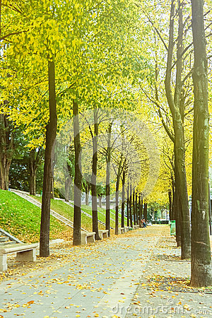 Free Green Alley With Trees In The Park Stock Photography - 64816492